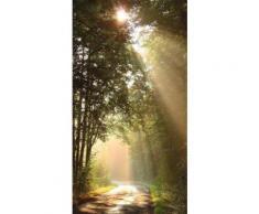 Fototapete »Sonnenstrahlen« bunt, L/B: 280cm / 150cm, FSC®-zertifiziert, rasch