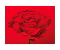 Fototapete bunt, L/B: 99cm / 99cm, »rote-Rose«, FSC®-zertifiziert, rasch