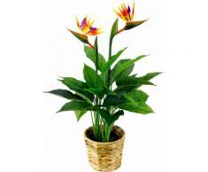 Kunstpflanze »Strelitzienpflanze in Wasserhyazinthentopf« orange, B/T/H, yourhome