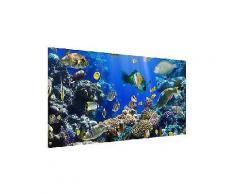 bilderwelten magnettafel quer 37cm x 78cm »underwater reef«