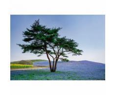 Papier Fototapete Baum & Blumen in Japan 368x254cm