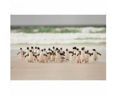 Papier Fototapete Gehende Pinguine 368x254cm