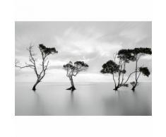Papier Fototapete Bäume im ruhigen Wasser 368x254cm