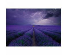 Papier Fototapete Lavendelfeld 368x254cm