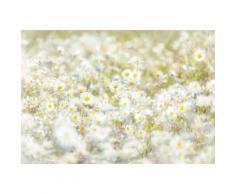 Komar, Fototapete, »Daisies«, 368/254 cm, weiß, weiß/gelb/grün