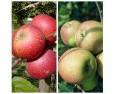 2er Set Apfelbaum Ingrid Marie + Rote Goldparmäne zweijähriger Buschbaum + 1x Dünger 130-170 cm M7