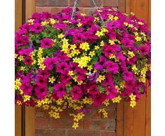 AIMADO Samen-50 Pc Mini-Hänge-Petunien, petunien Samen Unschlagbar in Wuchskraft, Blütenfülle und Leuchtkraft,Bienenfreundlich Blumensamen Saatgut für Balkon&Terrassenpflanze, Kübelpflanze