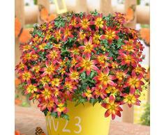 AIMADO Samen-Rarität 100 Pcs BeeDance Fire Wheel Bidens Samen Bienenfreundlich Blumensamen Zweifarbige Bidens-Sorte Bonsai Samen für Balkon&Terrassenpflanze, Kübelpflanze