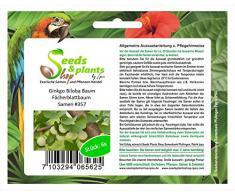 6x Ginkgo Biloba Baum Fächerblattbaum Samen Ginko Garten Pflanze #357