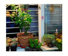 JDlept Sonnensegel, Rechteck Markisenüberdachung Garten Im Freien Terrassenpflanze Swimmingpool 50% Die Oben Angegebene Schattierungsrate Sonnenschutz. (Color : Meter Yellow, Size : 2m*1.8m)