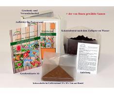 SAFLAX - Geschenk - Set - Bonsai - Roter Fächerahorn (Acer palmatum atropurpureum) - 20 Samen - Freilandbonsai - Mit Geschenk- und Versandbox, Geschenkkarte, Anzuchtsubstrat und Versandaufkleber