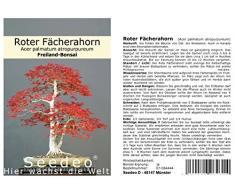 Seedeo Bonsai Geschenk - Set Roter Fächerahorn (Acer palmatum atropurpureum)