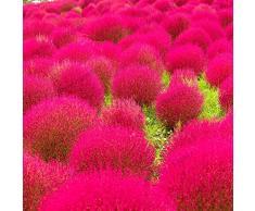 100pcs / bag broomsedge Samen Bonsai Grassamen Balkonpflanze grün broomsedge Samen im Freien Familiengartenpflanzen