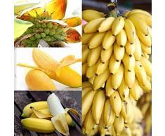 Portal Cool 200 Stück Milchgeschmack Banana Samen Zwergobstbaum im Freien Perennial Fruchtsamen