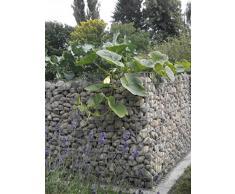 HOCHBEET Steinkorb-Gabione eckig, Maschenweite 5 x 5 cm, Länge 200 cm, Wandstärke 10 cm, Spiralverschluss, galvanisch verzinkt (200 x 100 x 100 cm)