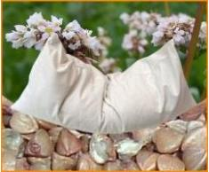 Bio-Buchweizenkissen mit Kissenhülle aus Bio-Baumwolle naturbelassen (40x80)