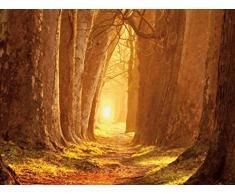 1art1 55513 Wälder - Magisches Licht, Waldweg Im Herbst, 2-Teilig Selbstklebende Fototapete Poster-Tapete 240 x 180 cm