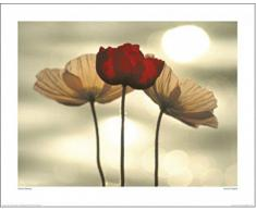 1art1 71408 Blumen - Isländische Mohnblumen, Yoshizo Kawasaki Poster Kunstdruck 50 x 40 cm