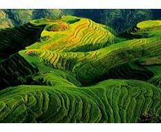 1art1 45208 Landschaften - Reisfelder, China Von Keren Su Poster Kunstdruck 70 x 50 cm