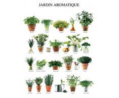 1art1 45304 Kräuter - Jardin Aromatique, Küchen-Kräuter Poster Kunstdruck 50 x 40 cm