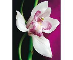 1art1 45332 Blumen - Orchidee, Amélie Vuillon Poster Kunstdruck 50 x 40 cm