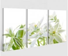Leinwand 3 tlg. weiß Lilien Blumen Blume Frühling Pflanze Bilder Wandbild 9A373, 3 tlg BxH:120x80cm (3Stk 40x 80cm)