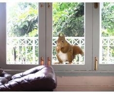 Fenstersticker No.137 Eichhörnchen tier wald eichhörnchen nüsse nagetier tier Fenstersticker Fensterfolie Fenstertattoo Fensterbild Fenster-Deko Fensteraufkleber Fensterdekoration Glas-Sticker Größe: 20cm x 18cm