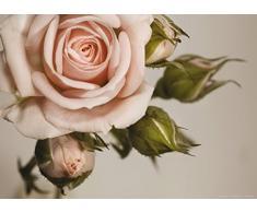 AG Design FTM 0820 Pinke Rose, Papier Fototapete - 160x115 cm - 1 Teil, Papier, multicolor, 0,1 x 160 x 115 cm