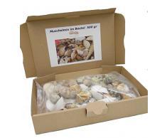 Muschelmix ca. 500g | Deko Muscheln und Schnecken | die maritime Dekoration für Vasen, Schalen oder als Streudeko | tropiesche echte Meeres-Muscheln aus der ganzen Welt | für Bad ode Heim | für alle Meeres und Insel-Fans - das