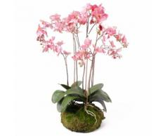 Emerald Kunstpflanze Phalaenopsis mit Moos Rosa 75 cm 417662