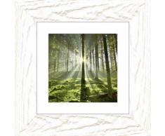 Artland Wandbild »Wald im Gegenlicht«