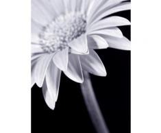 Home affaire, Leinwandbild, »Blume«, 30/40 cm