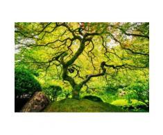 Home affaire Fototapete Japanese Maple Tree grün Fototapeten Tapeten Bauen Renovieren