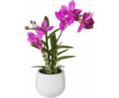 Creativ green Kunstpflanze (1 Stück) rosa Kunstorchideen Kunstpflanzen Wohnaccessoires