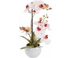 DELAVITA Kunstorchidee Ernestine, im Keramiktopf rosa Künstliche Zimmerpflanzen Kunstpflanzen Wohnaccessoires
