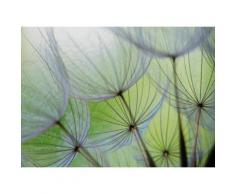 Fototapete Pusteblume Blume, grün, grün