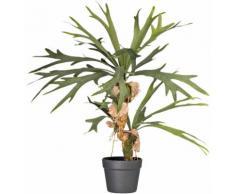 Künstliche Zimmerpflanze Platycerium (Geweihfarn), grün, grün