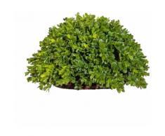 Creativ green Kunstpflanze Buchsbaum Halbkugel grün Künstliche Zimmerpflanzen Kunstpflanzen Wohnaccessoires