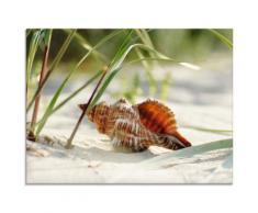 Artland Glasbild Große Muschel am Strand beige Glasbilder Bilder Bilderrahmen Wohnaccessoires