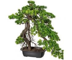 Creativ green Kunstbonsai Bonsai Podocarpus (1 Stück) grün Künstliche Zimmerpflanzen Kunstpflanzen Wohnaccessoires