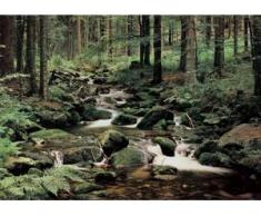 papermoon Vlies- Fototapete Digitaldruck 350 x 260 cm, Nature