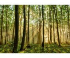 papermoon Vlies- Fototapete Digitaldruck 350 x 260 cm, Forest