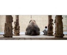 Deco-Glas Bild - Elefant 80 x 30 cm