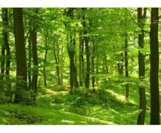 papermoon Vlies- Fototapete Digitaldruck 350 x 260 cm, Forest in Spring