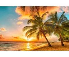 papermoon Vlies- Fototapete Digitaldruck 350 x 260 cm, Barbados Palm Beach