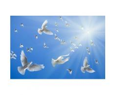 Fototapete »White Doves«, glatt