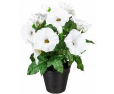Künstliche Zimmerpflanze »Stever« Petunie, DELAVITA, Höhe 28 cm