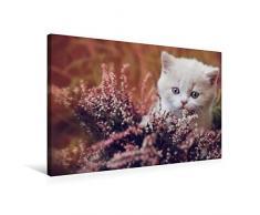 Calvendo Premium Textil-Leinwand 75 cm x 50 cm quer, BKH Katzenkind Creme-White   Wandbild, Bild auf Keilrahmen, Fertigbild auf echter Leinwand, Leinwanddruck Tiere Tiere