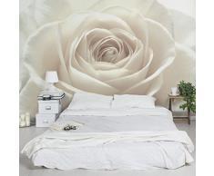 Apalis Rosentapete - Vliestapete - Blumentapete - Pretty White Rose - Blumen Fototapete Breit | Vlies Tapete Wandtapete Wandbild Foto 3D Fototapete für Schlafzimmer Wohnzimmer Küche | Größe HxB:255x384cm