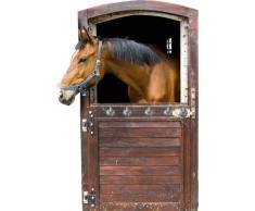 Graz Design 971013 Wandsticker Garderobe mit 5 Haken Wandhaken für Kinderzimmer Pferd Stall